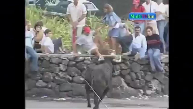 Подборка Быки нападают на людей