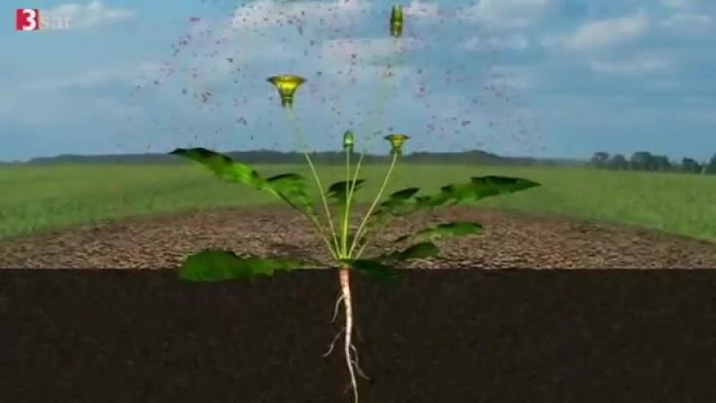 Gift auf dem Acker - Monsanto Roundup (3sat) Am 07.02.2012 veröffentlicht