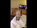 Кот чихнул (240p).mp4