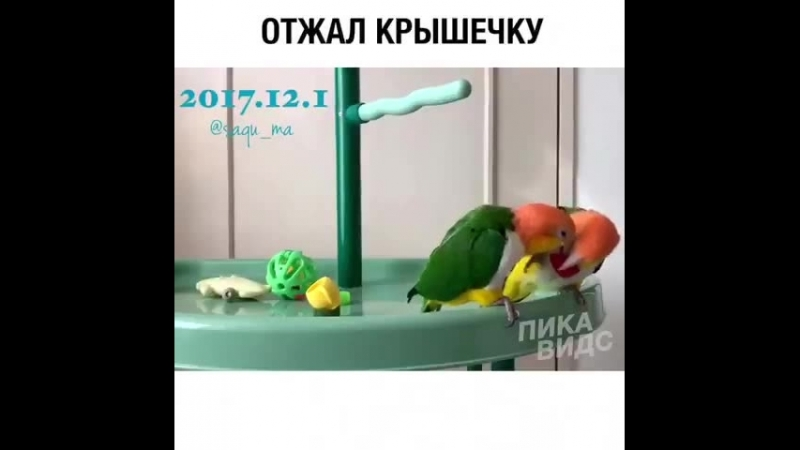 Video_2018-07-13T16.59.12.mp4