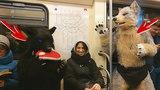 ФУРРИ В МЕТРО / Furry in the Moscow metro ✂ Irruan