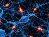 BBC: Тело человека (5) Мозг человека / The Human Body (Кристофер Спенсер / Christopher Spencer)