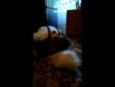 Video-3958152bff8fd0bfe0d5724f3028a58e-V.mp4