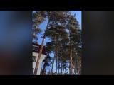 Уральские зори, страусиная ферма....