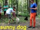 Пес непослушен переделываем Переделать собаку или себя научить правильный подход к дрессировке