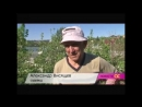 Наш яблоневый сад на АС Байкал ТВ
