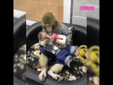 Обезьяна кормит своего малыша