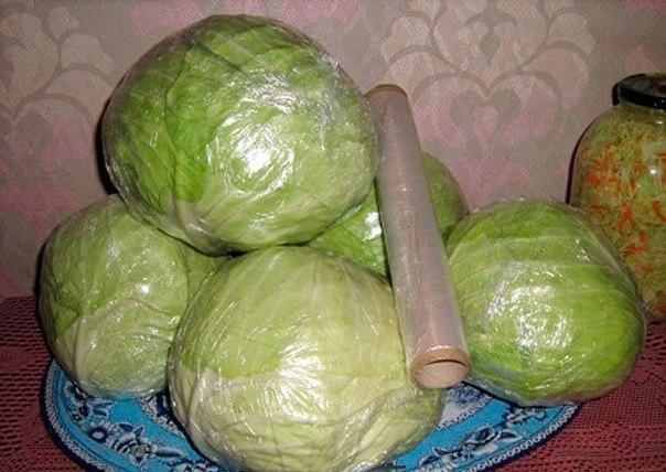 Как сохранить свежую капусту в домашних условиях