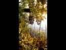 бобры на реке