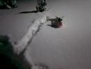 🐾Новилара долина джек рассела 🐾 и снег