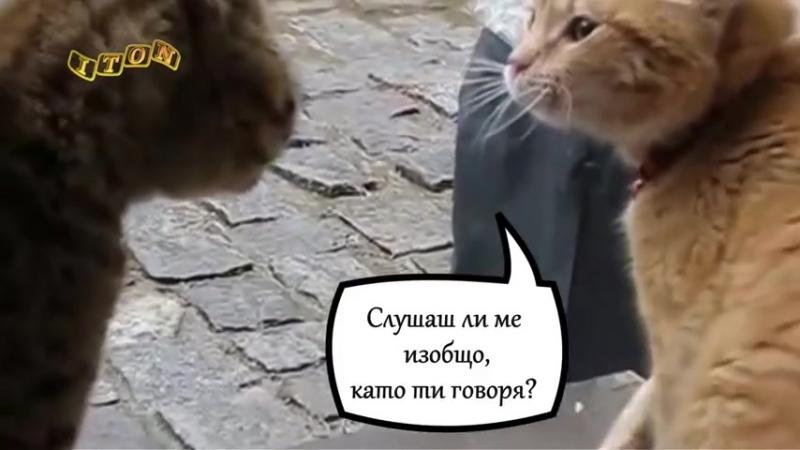 Смешни котки - Семеен скандал _ Funny cats - Family scandal ( 480 X 854 ).mp4