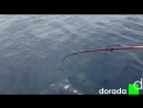 Морская рыбалка в Испании. Cambrils, Salou, La Pineda (Камбрилс, Салоу, Ла Пинеда)