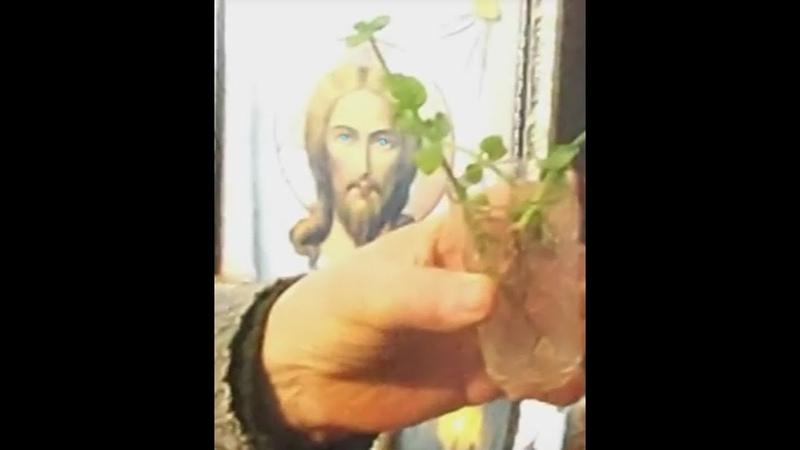ЧУДО= В храме МОЛДОВЫ растет цветок без земли и воды перед иконой синеглазого русого Исуса