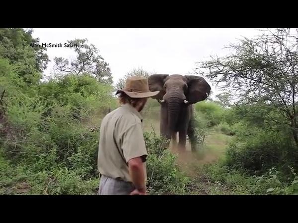 Мужик и слон