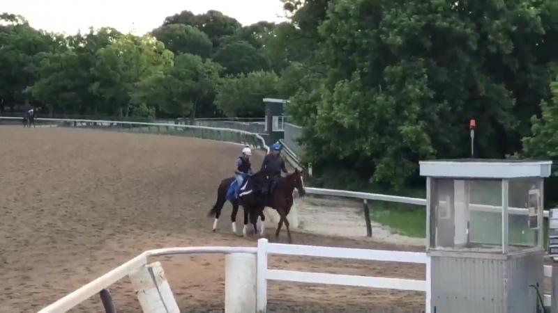 BelmontStakes contender Tenfold returning to trainer Steve Asmussen's barn