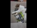 Кот сломался VIDEO ВАРЕНЬЕ