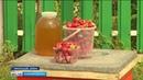 Клубничный рай в башкирской глубинке в Шаранском районе процветает медово–ягодная станица