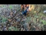 Терц-Мажор( Гаш)- охотник за ежиками