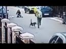 Уличный пёс спас женщину от грабителя