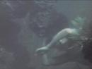 Bird of Paradise - drowning