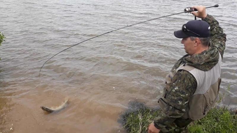 Щука на видео Зеленовский пруд
