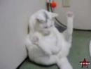 Мастурбирующий кот)))