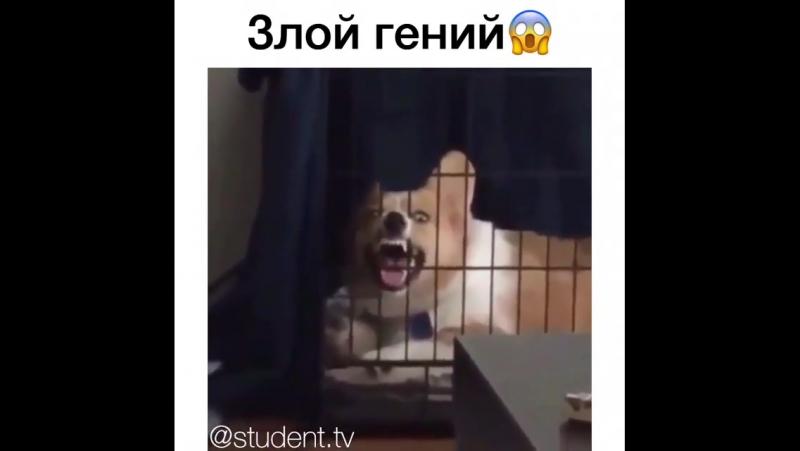 Осторожно злая собака !