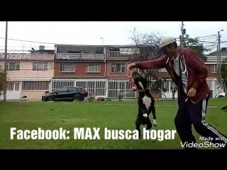 Max busca hogar Colombia