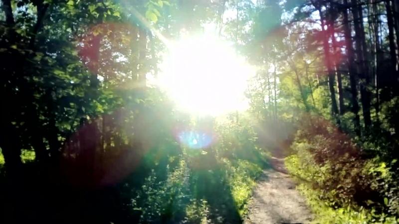 Пешая медитация. Московский лес. 25 мая 2018 г.