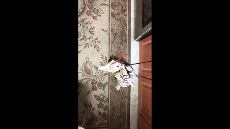 Прыжок бенгалки в замедленной съёмке
