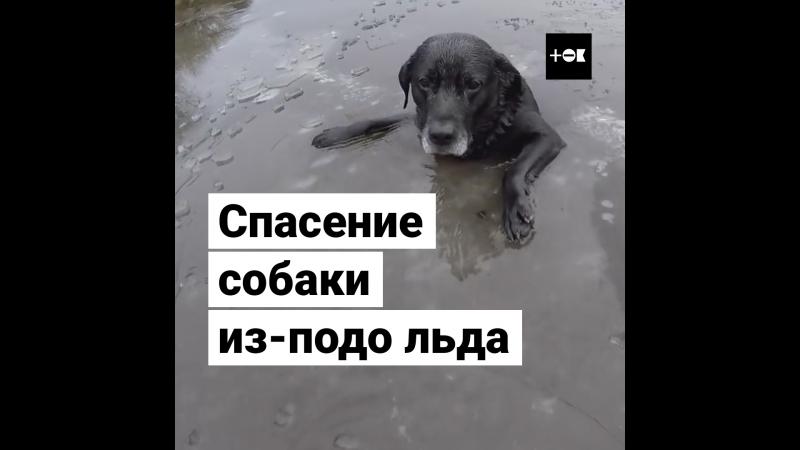 Спасение собаки в проруби