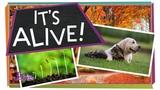 It's Alive! Biology for Kids