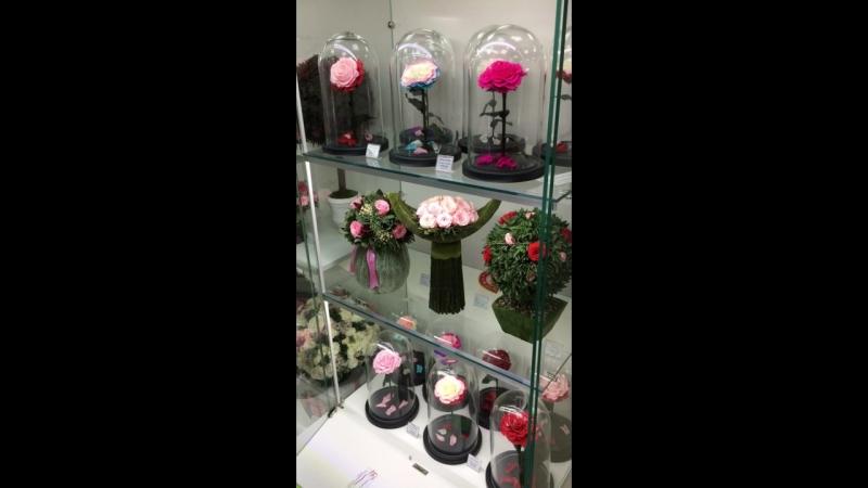 Вечная Роза. Неувядающие 5 лет Живые Стабилизированные Цветы Крым