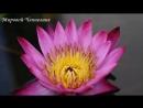 🔹КАК ОТДАТЬ ЭНЕРГЕТИЧЕСКИЕ ДОЛГИ Послание Богородицы (Звездной матери)