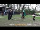 Viorel Scinteie - BEST OF 2017 part 1 Ipo-Schutzhund - Training dogs .mp4
