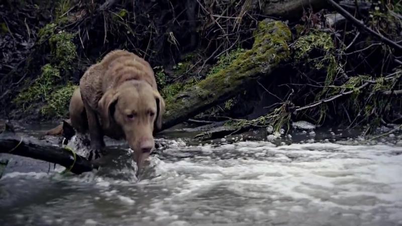 Глеб Корнилов - Бродячий пёс