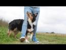 Dog Trick Tutorial_ Your feet on mine