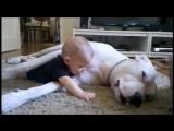 Собаки и дети, лучшие друзья