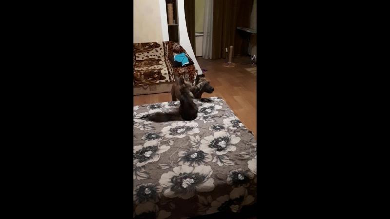 Играют друг с другом🐶🐱 как кошка с собакой🐕🐈😂😂