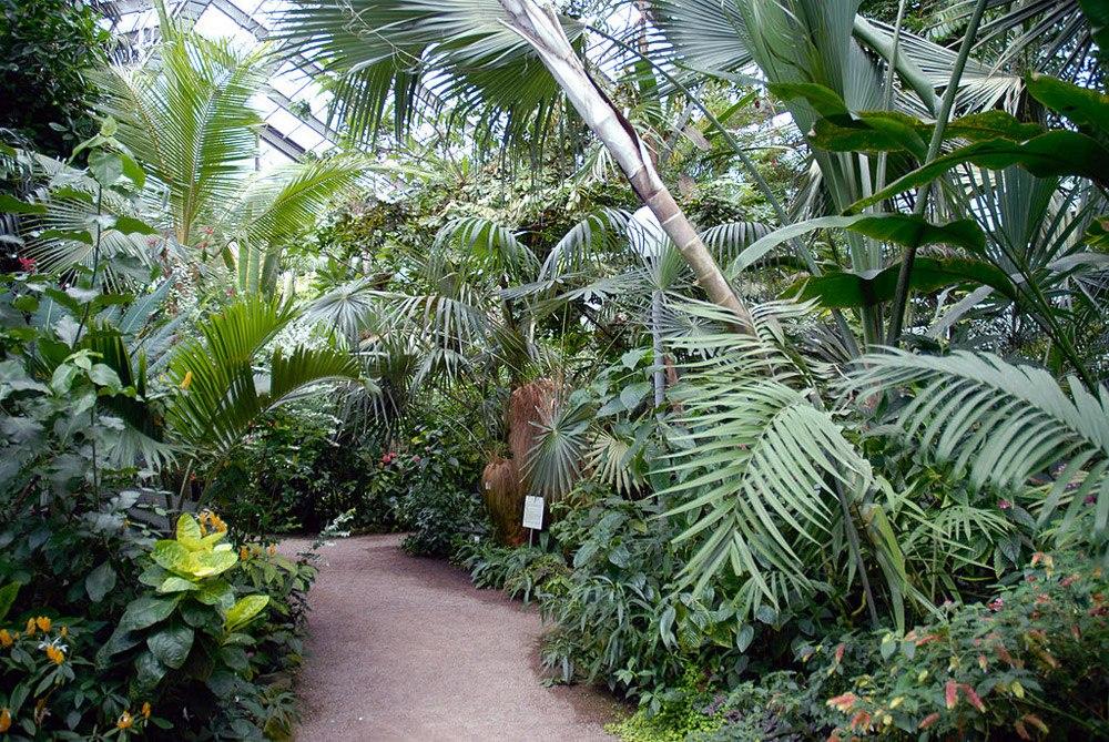 Сезон экскурсий по ботаническому саду Тимирязевки откроется 1 июня