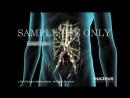 Medical Animation- Testicular Cancer