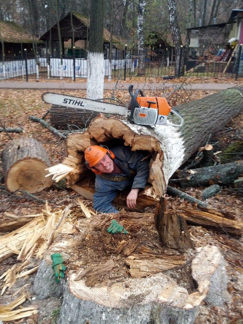 Спилить деревья. Дробление пней Фото (Коломна) удалить Спилить свалить пней дробление дерево