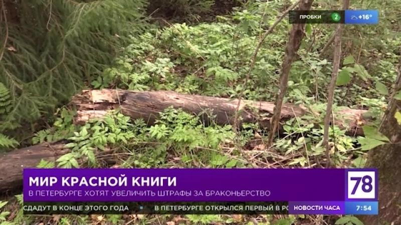 В Петербурге хотят увеличить штрафы за браконьерство