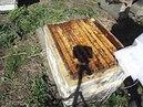 работа на пасеке в мае - когда лучше подставлять вощину пчелам