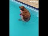 Собака ну очень любит бассейн