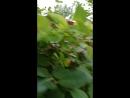 ягодкиии