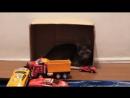 Кошка играет с игрушкой видео 36