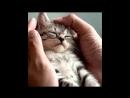 Грустная история о коте!До слёз!.mp4