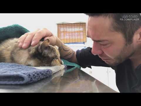 Молодой человек прощается со своей умирающей кошкой, с которой он прожил 13 лет