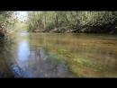 Река стрелка Май 2016